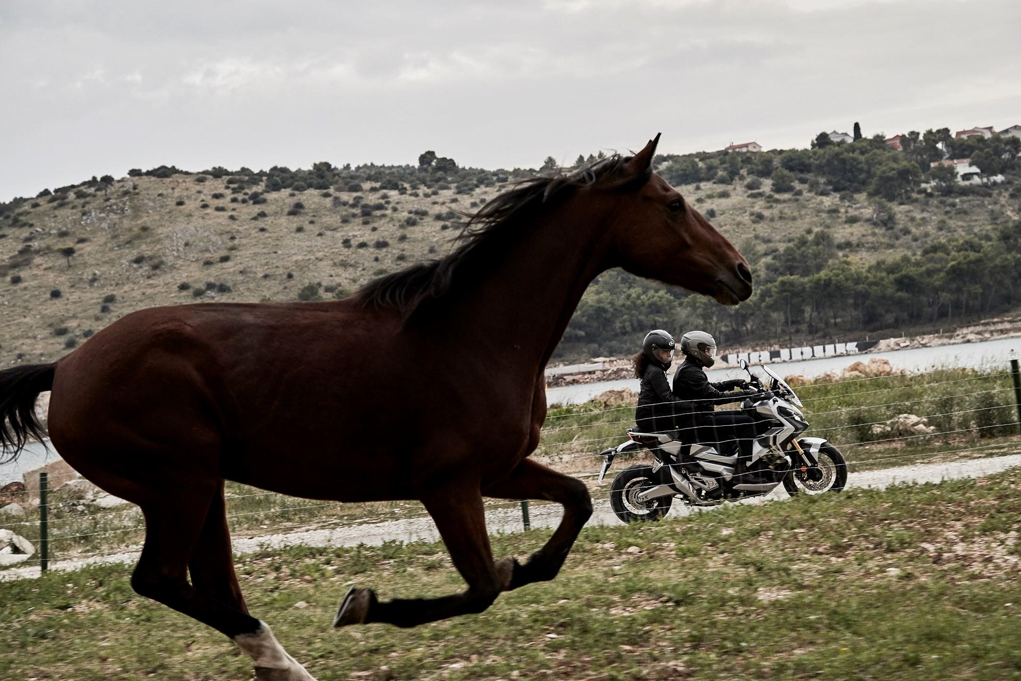 HONDA X-ADV bei Auto Stahl Seitenansicht mit Pferd