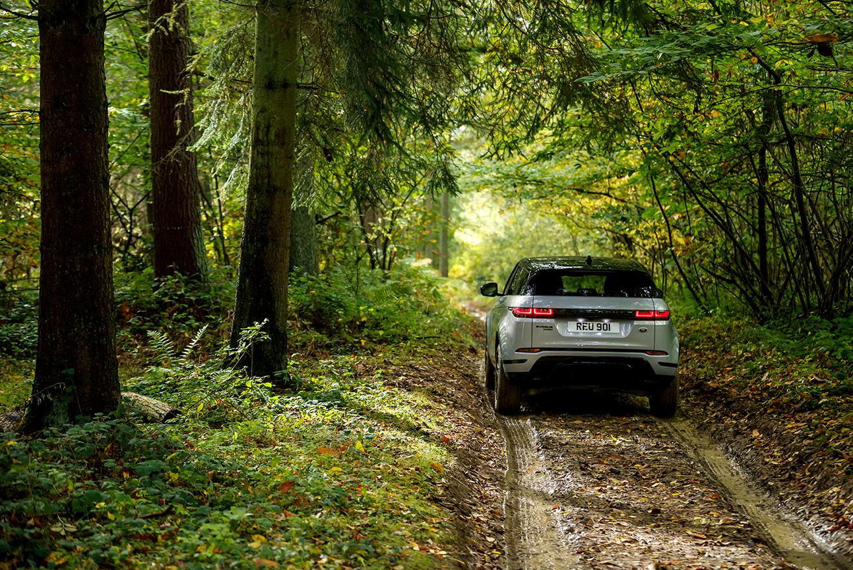 Range Rover Evoque 2019 Heckansicht Wald Natur Silber Auto